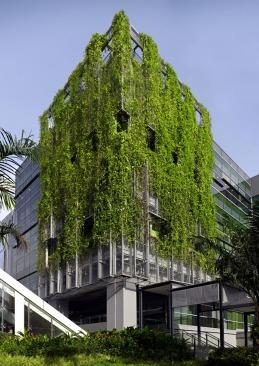 fachada-verde-trepadeira